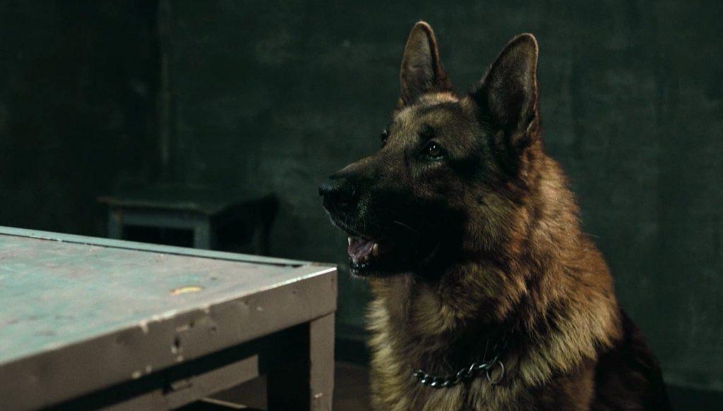 Кадр из сериала Пес
